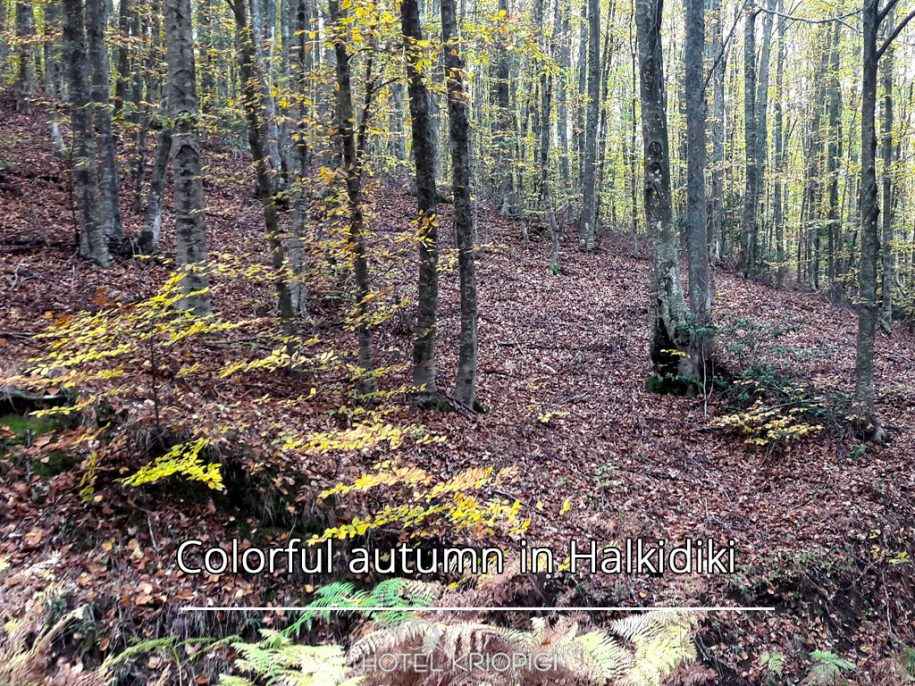 Colorful autumn in Halkidiki